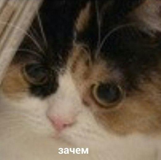 mqbr2_fvDN4.jpg