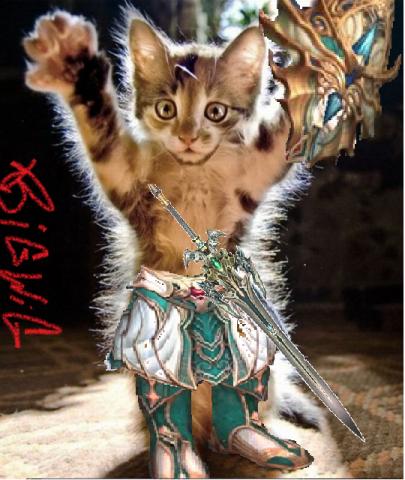 Всем Кота!