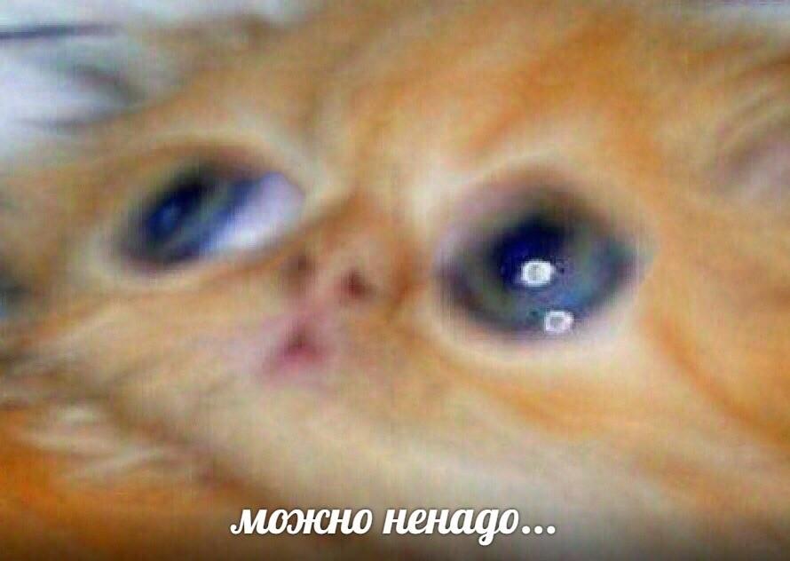 mozhno-nenado-mem-9.jpg.cd41e325e83705741480e2f6ddd823b2.jpg