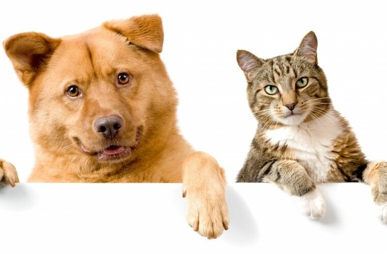 коти пёс.jpg